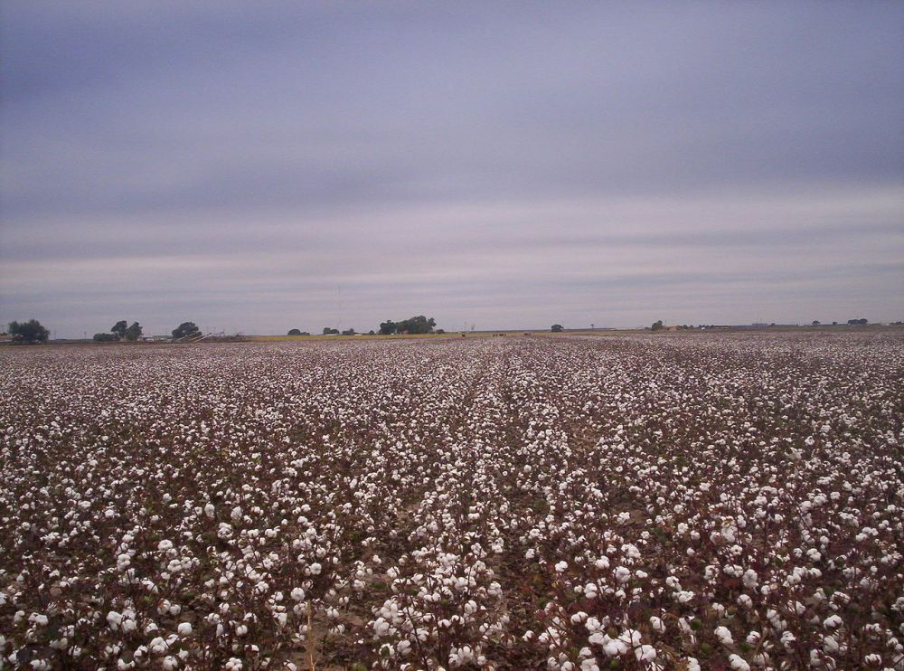 1280px-west_texas_cotton_fields