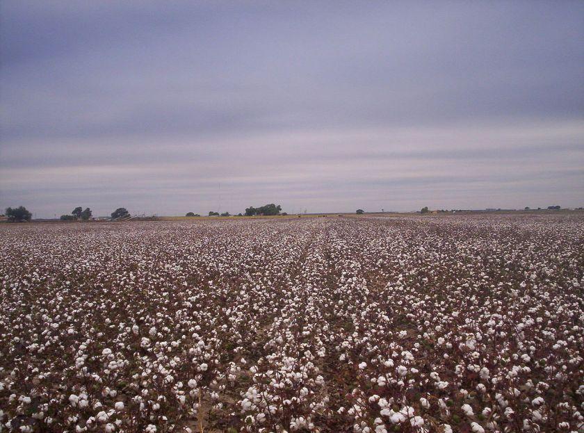 1280px-west_texas_cotton_fields